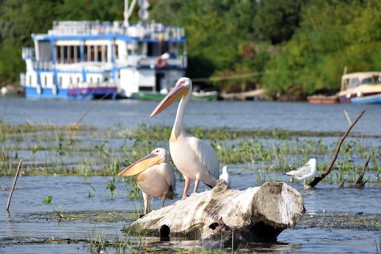 Delta Dunării, cea mai sigură destinaţie turistică în pandemie