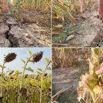 Seceta din acest an a afectat culturile agricole și pășunile. Fermierii nu mai au cu ce să-și hrănească animalele